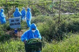 Nghĩa tình trên những cánh đồng ở tâm dịch Thuận Thành