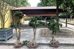 Nhóm đối tượng chuyên trộm cắp cây cảnh của nhà chùa
