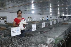 Phát triển hợp tác xã nông nghiệp: Gắn với sản xuất theo chuỗi giá trị