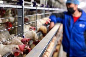 Người đầu tiên nhiễm cúm gia cầm H10N3 ở Trung Quốc