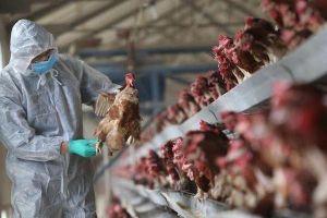Trung Quốc phát hiện người đầu tiên mắc chủng cúm gia cầm hiếm gặp