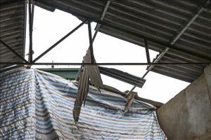 Dông lốc làm tốc mái và sập 138 ngôi nhà, trường học tại Lào Cai