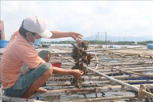 Tồn hàng, nhiều hộ nuôi cá lồng bè trên sông Chà Và rơi vào cảnh khó khăn