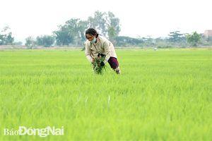 Phú Điền - xã đầu tiên của huyện Tân Phú đạt chuẩn nông thôn mới nâng cao