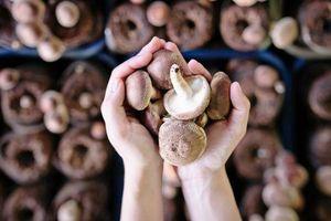 Ăn 2 cây nấm mỗi ngày giúp giảm 45% nguy cơ mắc ung thư