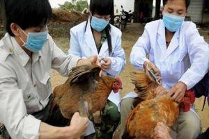 Trung Quốc xuất hiện ca cúm gia cầm H10N3 đầu tiên trên người, WHO vẫn chưa tìm được nguồn lây