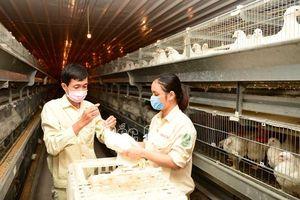 Bắc Giang: Chủ động ngăn chặn nguy cơ xâm nhiễm chủng vi rút cúm gia cầm A/H5N8