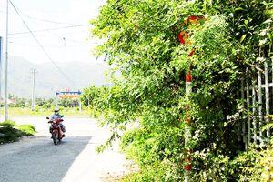 Biển báo giao thông núp trong bụi cây