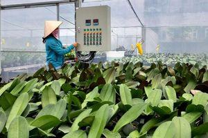 Đưa sản xuất hoa, cây cảnh thành ngành kinh tế