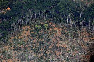 Brazil: Rừng Amazon tiếp tục bị lâm tặc tàn phá nghiêm trọng