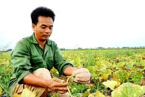 Đồng Nai: Trồng thứ quả mệnh danh là 'nhà vô địch dinh dưỡng', nông dân chỉ lấy hạt đem bán mà kiếm bộn tiền