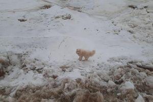 Tàu phá băng của Nga giải cứu chú chó mắc kẹt
