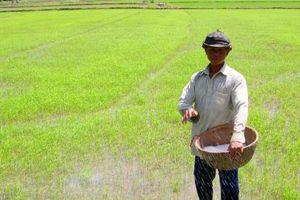 An Giang khuyến cáo hạn chế xuống giống nhóm lúa chất lượng thấp vụ thu đông