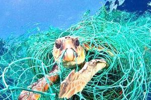 Sinh vật biển hiếm dần biến mất khi biển xanh bị nhuộm màu