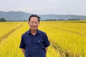 Con đường phát triển và những tín hiệu tốt đối với lúa lai Việt Nam