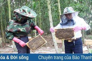 Nhân rộng mô hình nuôi ong dưới tán rừng