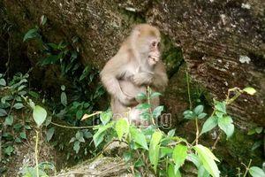 Bắc Giang: Thả 3 cá thể động vật về rừng tự nhiên
