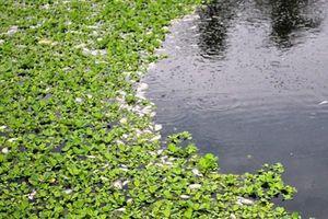 Quảng Nam: Cá chết nổi trắng hồ điều tiết bốc mùi hôi thối