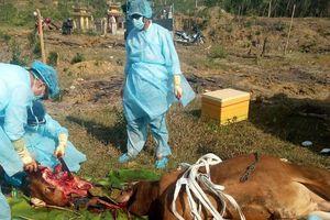 Quyết liệt triển khai các giải pháp phòng, chống bệnh dại ở động vật