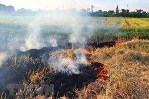 Tổng cục Môi trường: Giám sát đốt rơm rạ để giảm ô nhiễm không khí