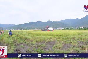 Nông dân Mường Tấc, Sơn La trở lại với canh tác hữu cơ