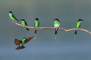 Những hình ảnh động vật đẹp mê hồn trên khắp thế giới