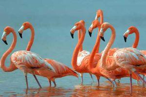Những sự thật bất ngờ và đáng yêu về các loài động vật