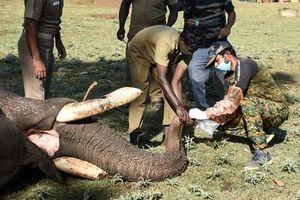 Ca mắc Covid-19 tăng trở lại ở một số quốc gia, Ấn Độ xét nghiệm cho voi
