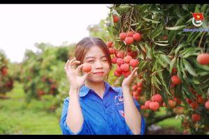 Vườn vải Lục Ngạn trĩu quả đẹp mắt dưới ống kính của đoàn viên Bắc Giang