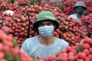 Bắc Giang: Vải thiều 'nhuộm đỏ' thị trấn Chũ