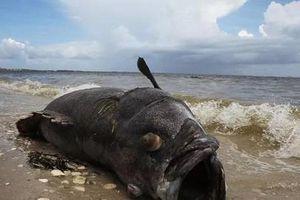 Clip ngư dân câu được cá khổng lồ quý hiếm, ai cũng hết hồn vì trông như 'quái vật biển'