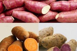 Ăn khoai lang màu trắng, vàng hay tím tốt hơn?