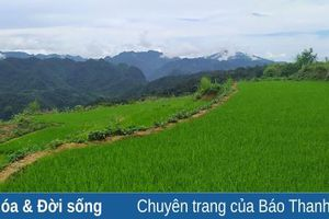 Nhân rộng giống lúa nếp hạt cau ở Pù Luông để phục vụ du lịch