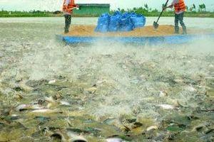 Cá tra Nam Việt: Mục tiêu doanh thu 4.500 tỷ đồng, lợi nhuận trước thuế 450 tỷ đồng