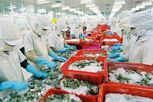 Chất lượng bảo quản thủy sản trên tàu, cảng cá chưa được cải thiện đáng kể