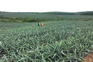 Thí điểm xây dựng 5 vùng nguyên liệu nông sản