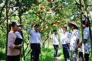 Đồng Tháp: Kết hợp xây dựng NTM với tái cơ cấu nông nghiệp