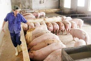 Hà Nội đề xuất Bộ Nông nghiệp nhiều chính sách phát triển chăn nuôi nông hộ