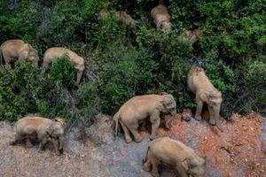 Công ty rau quả méo mặt vì đàn voi làm trễ đơn hàng