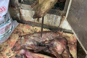 Vụ hàng tấn thịt lợn chết thối: 'Ế nên cất tủ đông'