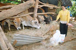 Phát triển chăn nuôi nông hộ cần gắn với du lịch sinh thái