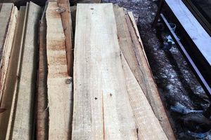 'Xẻ thịt' 3 cây thông, bị xử phạt gần 300 triệu đồng