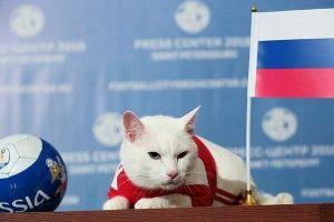 Mèo lông trắng Achilles trở thành 'nhà tiên tri' Euro 2020