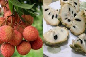 10 loại trái cây ngon ngọt nhưng gây nóng trong, nổi mụn nhọt, không nên ăn nhiều vào mùa hè