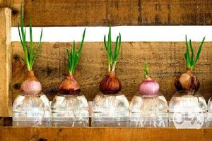 3 loại cây gia vị, có tinh dầu trồng trong nhà bếp giúp khử mùi cực tốt