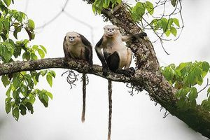 2 loài động vật Việt Nam vào danh sách 'xấu nhất thế giới'