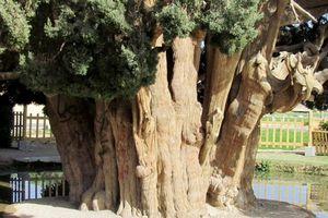 Báu vật sống 4.500 tuổi của Iran, ai cũng ước mơ một lần được chiêm ngưỡng