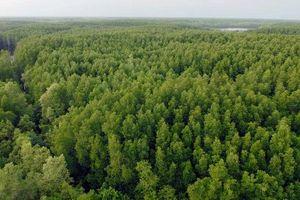 WB tài trợ hơn 17 triệu USD cho 32 xã ven biển Quảng Bình phục hồi lại rừng