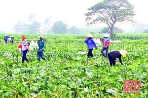 Thực hiện tốt công tác quy hoạch, bố trí đất đai cho sản xuất nông nghiệp
