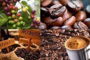 Viettel Global kinh doanh thêm cafe do thiếu hụt nguồn cung USD